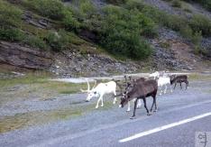 nordkapp-ferragosto2012-012