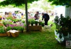 festival-del-verde-2014-_-roma-08