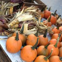 Le-zucche-per-Halloween