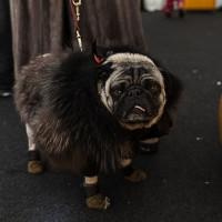 uglydog! LOL by Luca Bonaduce