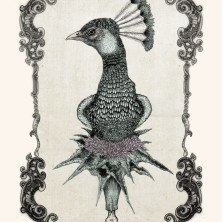 peacock--pen-on-paper-and-digital-coloringByNoaAlon
