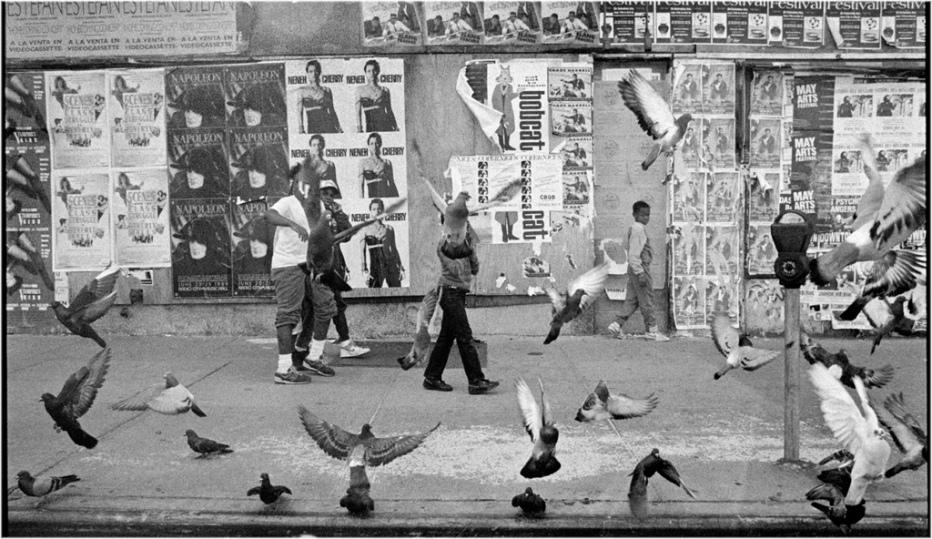 pigeon-boys-1988-copy