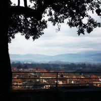 Torre Guinigi - 006