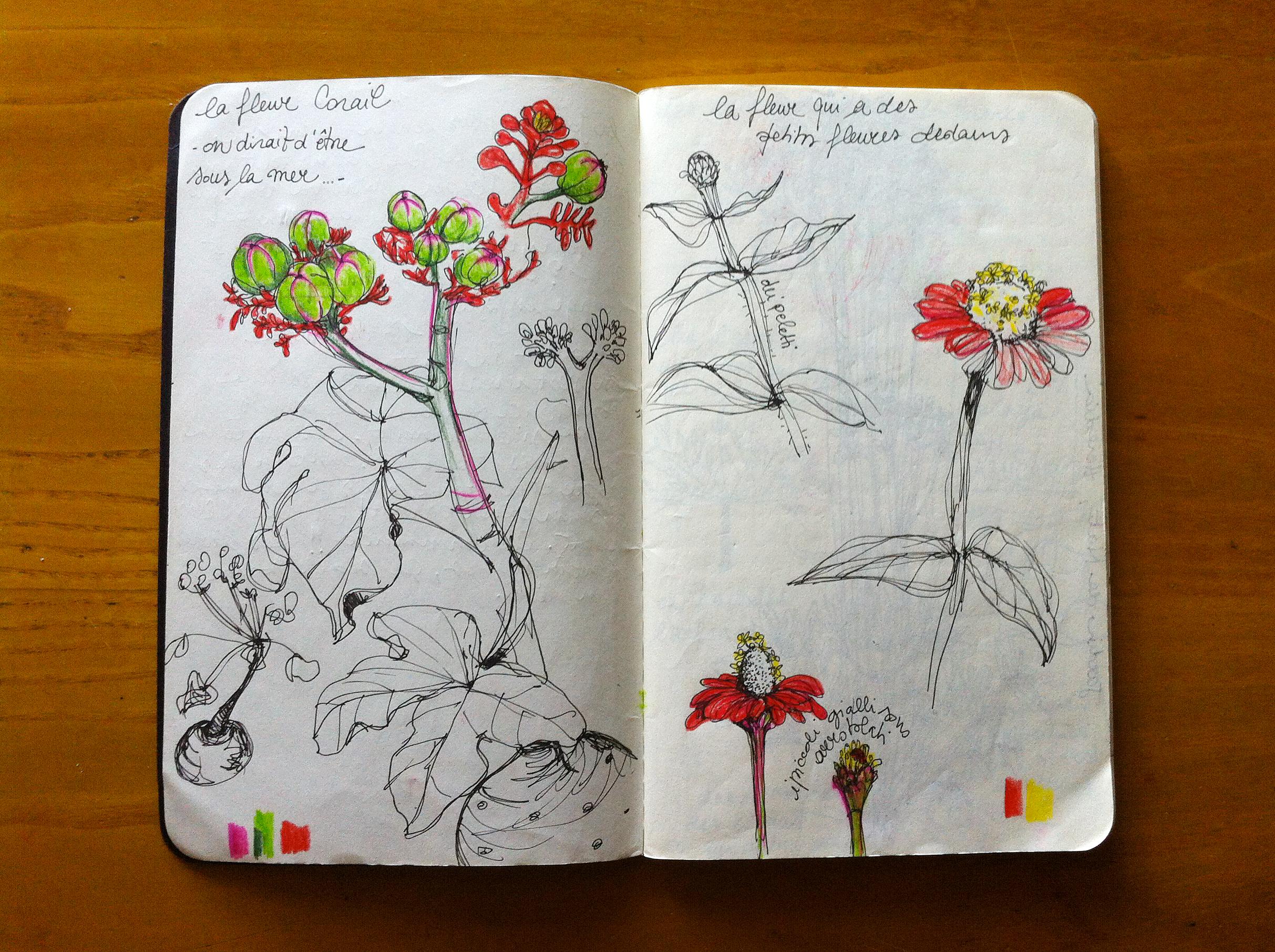 Costa Rica - la fleur corail - Silvia Robertelli