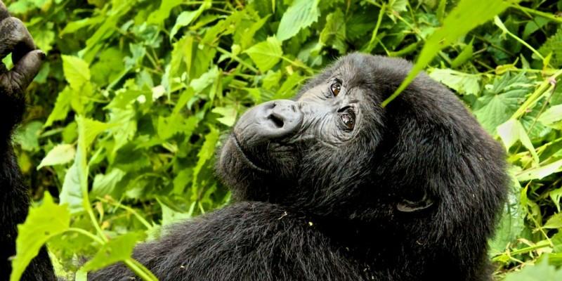 2013-12_uganda_0720_c