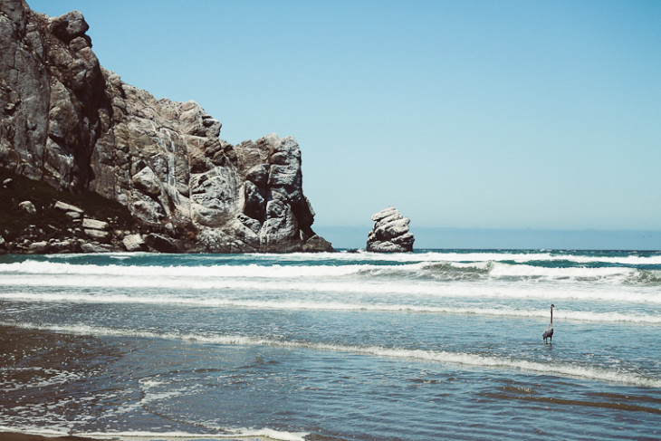 Morro_Bay_California_Heron