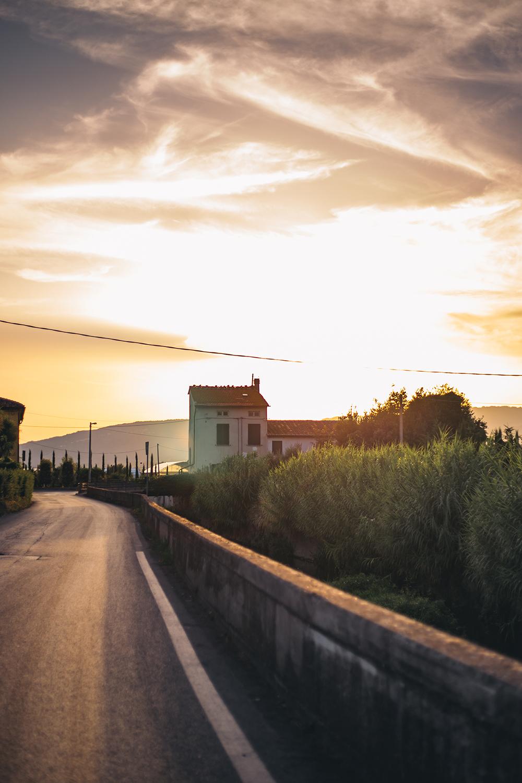 """Pistoia è conosciuta come """"la città delle piante"""" perché letteralmente circondata da vivai: qui il vivaismo è la più importante attività economica, tradizione nata a metà '800 e che si è fortemente sviluppata dal secondo dopoguerra."""