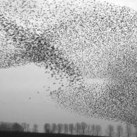 The art of flying - Jan van IJken