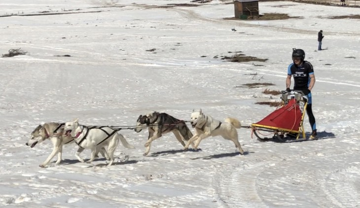 dogs on the snow