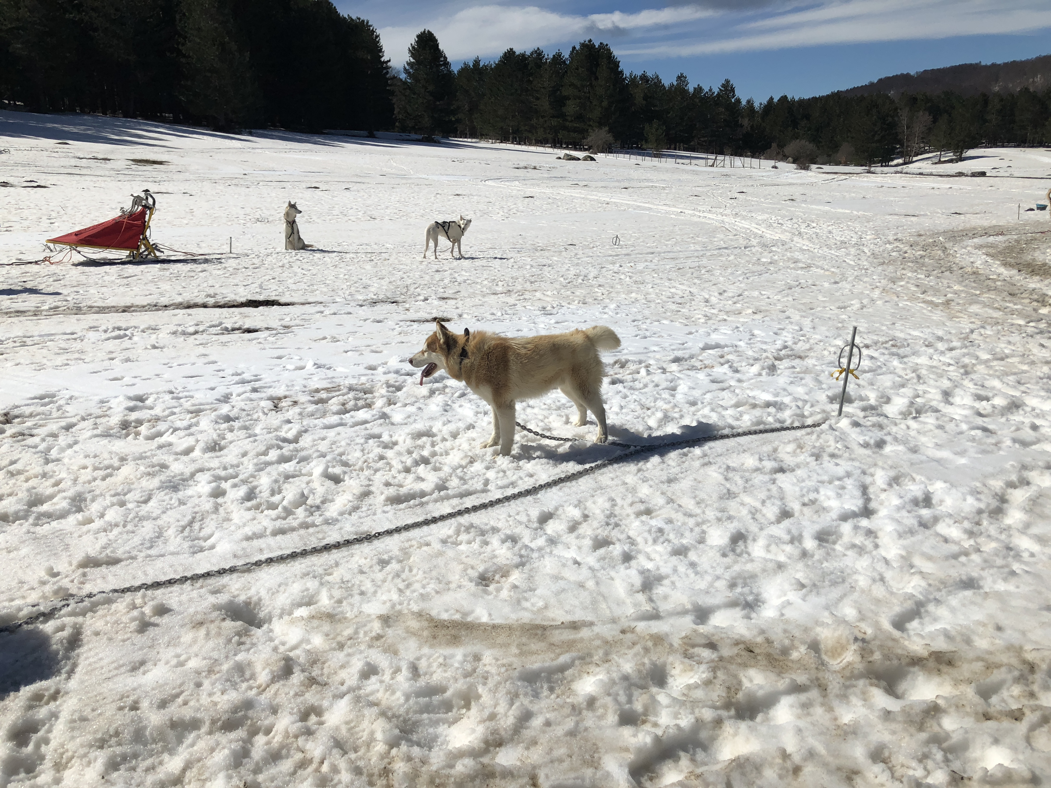 dogs on the snow _ due