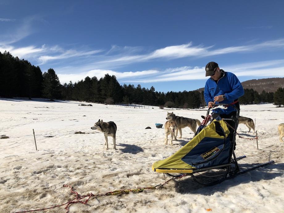 dogs on the snow _ sila