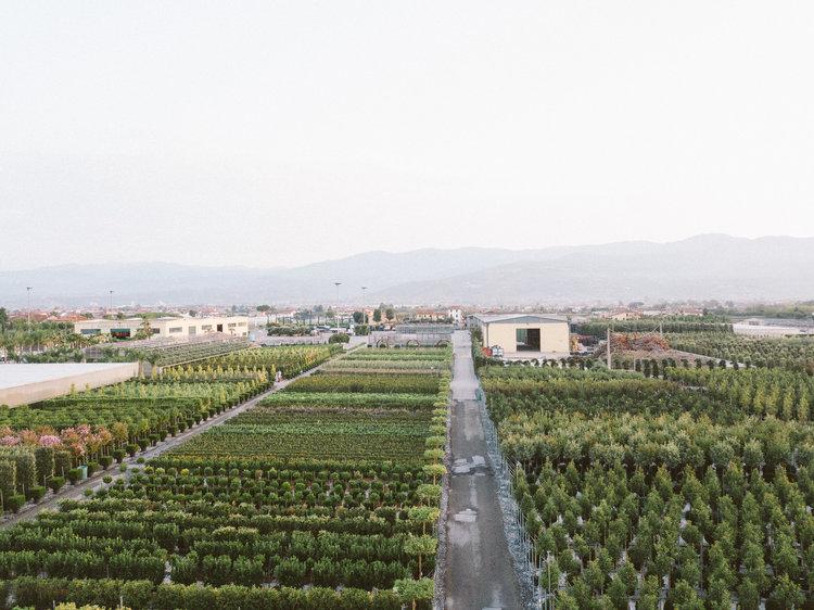 Plant Nursery in Pistoia