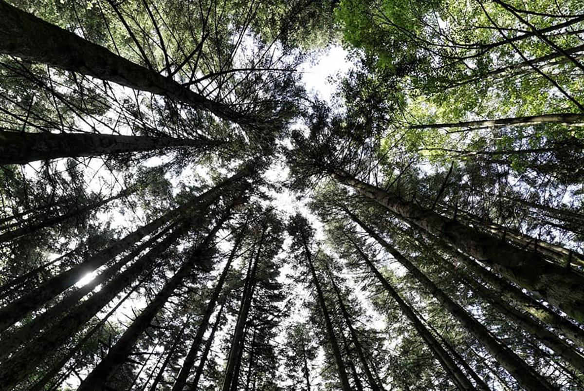 Casentino - foresta