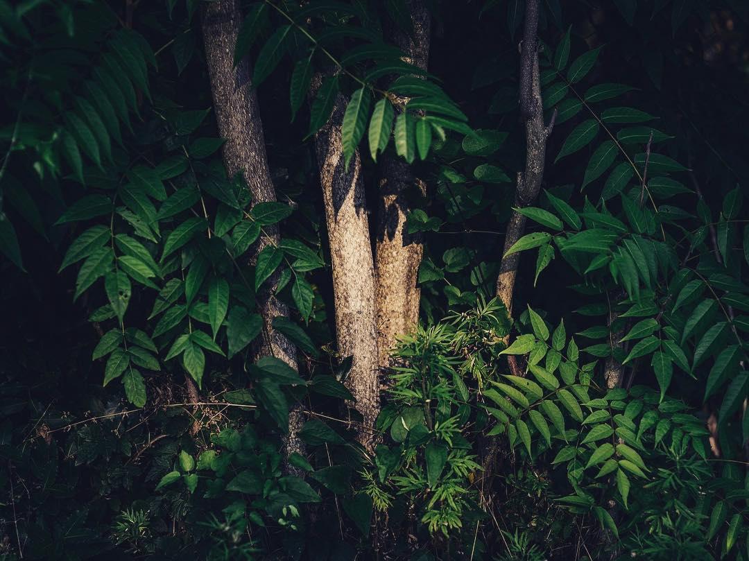 TAI 2018 - nature